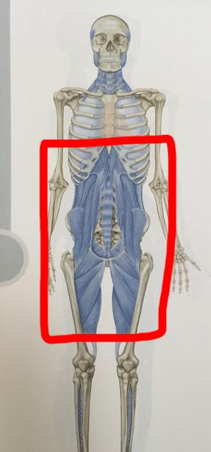 DFL筋膜写真